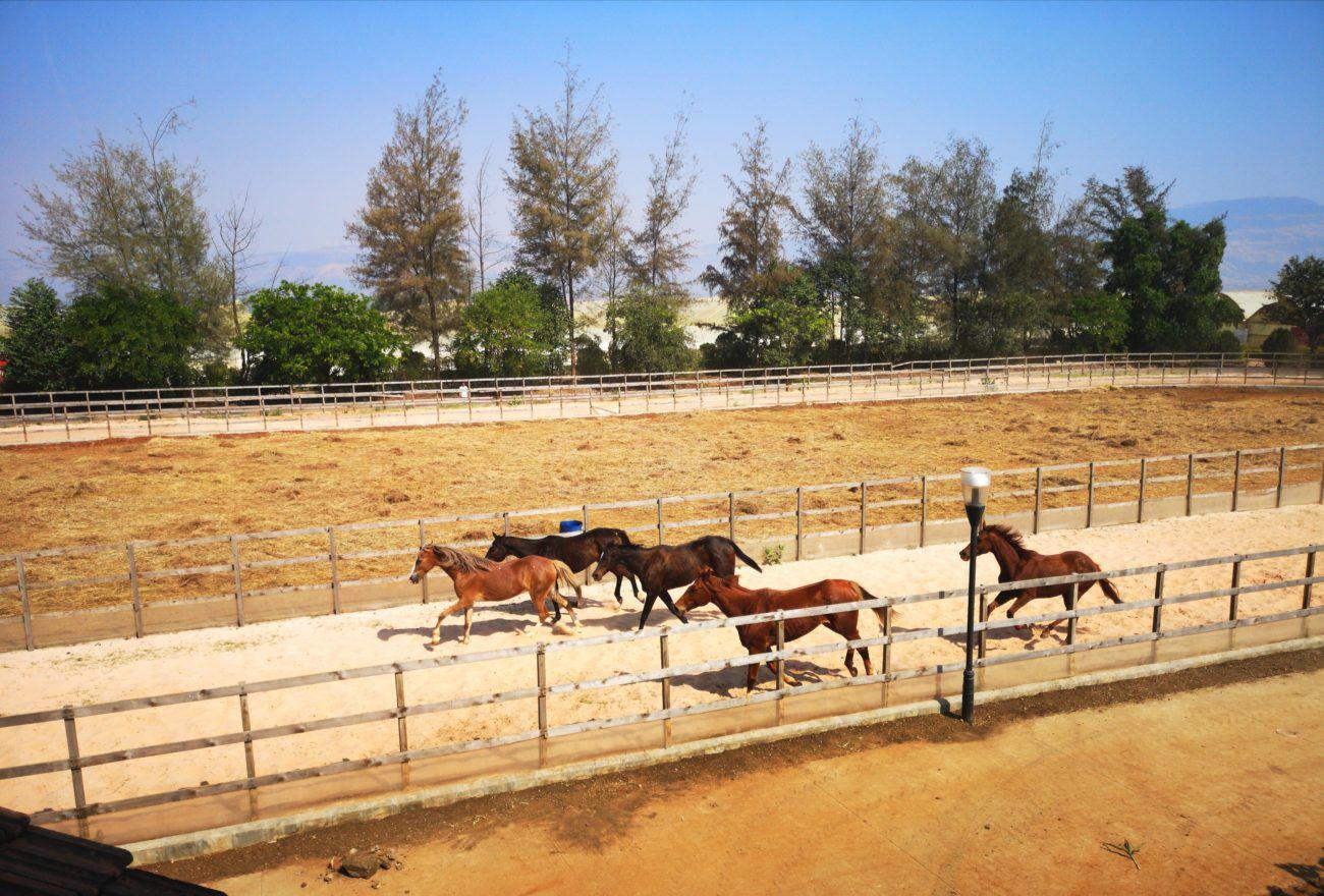 Horse Riding at Fazlani