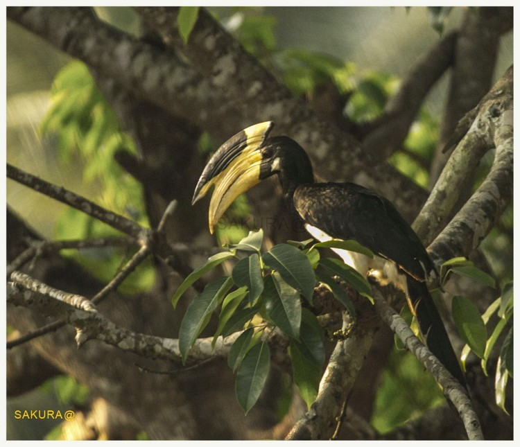 birds-of-ganeshgudi